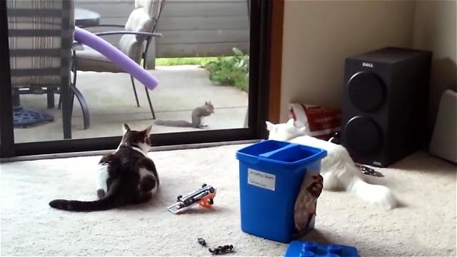 何でこうなるの!?|二匹の猫が庭にやって来たリスを見つけた結果…
