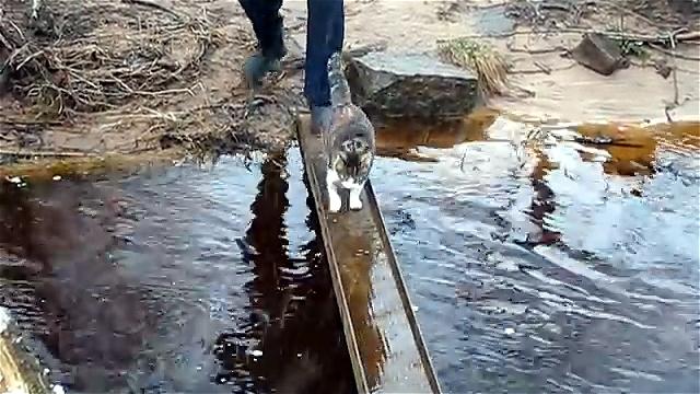 橋を渡る猫の水溜り回避技が見事すぎる案件…(笑)