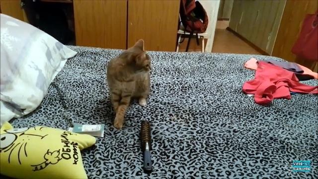 鼻がむず痒い一匹の猫|クシュン!と大きなくしゃみをした結果…