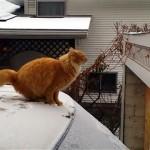 バカ受け! ジャンプした猫に予想を裏切らない展開が…