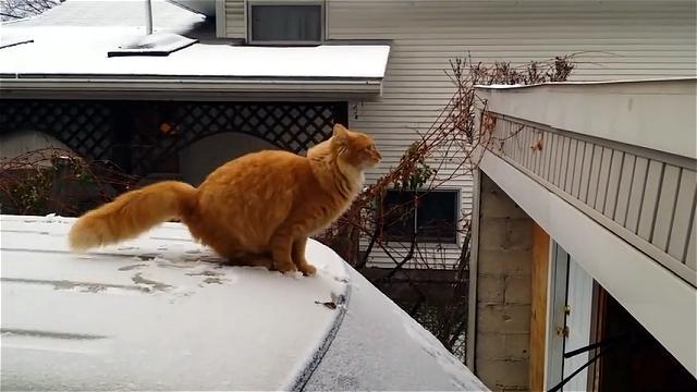 バカ受け!|ジャンプした猫に予想を裏切らない展開が…