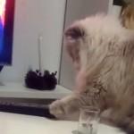 飼い主の指示に従わない悪戯好きな猫。性格悪すぎ(笑)