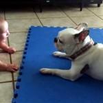 赤ちゃんを笑顔にさせるワンちゃんの見事なパフォーマンス
