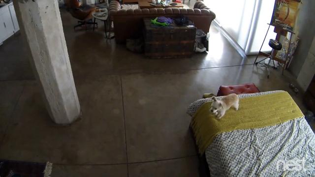 無駄吠えをする子犬を猫がひと睨みした結果…