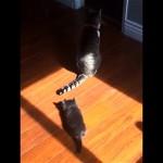 新参者の子猫が先輩猫の尻尾で遊ぼうとした結果(笑)