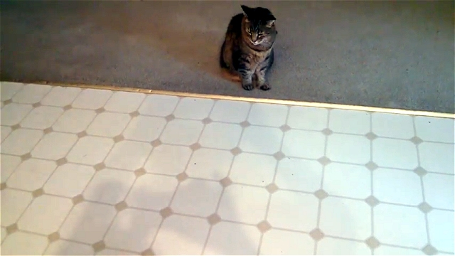 猫は見かけによりません|平凡そうな猫にはこんな特技が…