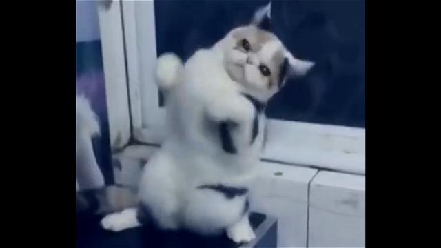 これは凄い!|キレキレのキャット・ダンスを披露するニャンコ