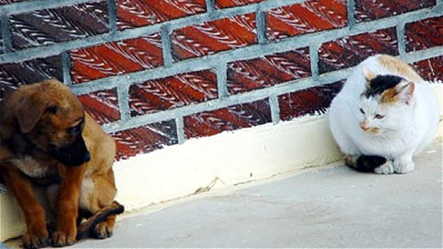 寒そうに震える猫と子犬に心に沁みる素敵な出来事が… 4枚