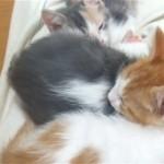 可愛い寝顔でお昼寝中の三匹の猫兄弟、一匹を退かせてみたところ…