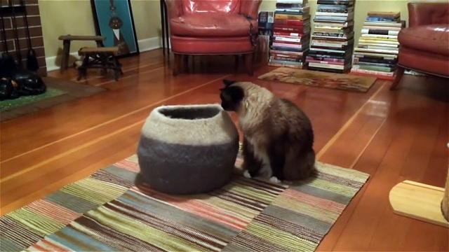 壷の中に隠れた子猫が先輩猫にドッキリを仕掛けてみた結果…。