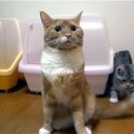 尻尾を触ると激オコの先輩猫、子猫が考えた怒られずに尻尾を触る方法(笑)