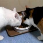 猫パンチを食らった白猫、三毛猫が怒るのも無理ないにゃ~