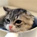 初めてのお風呂に不安でドキドキの子猫が数分後にはこうなりました(笑)
