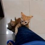 食事時間になると食卓に集まってくるかわいい子猫たち
