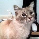 一匹の野良猫を保護したところ、2ヵ月後に驚きの出来事が… 12枚