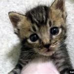 変わりすぎ!|子猫のビフォー・アフターに爆笑