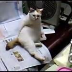 お尻を掻きながらテレビを見ている格好が何処から見てもおっさんな猫