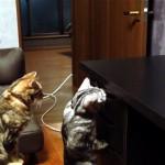 おやつの引き出しを開けようと奮闘する猫に衝撃の結末が…