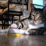ベルを使って猫を訓練したらこうなった。