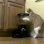 自動給餌器からオヤツをゲットする方法が衝撃的すぎる猫