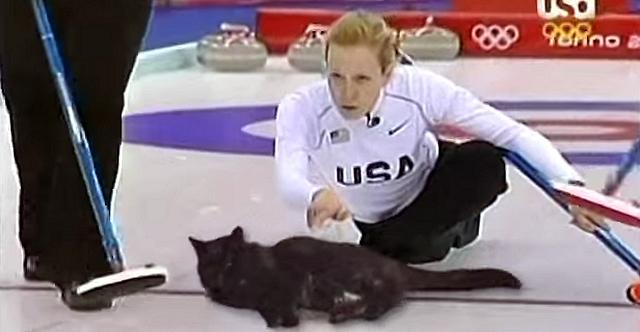 もしカーリングのストーン(石)を猫に変えたら、こんな感じになるかも…(笑)