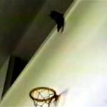 バスケの練習を見ている猫にボールをパスしてみたところ…