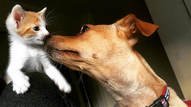 元保護犬が独りぼっちの子猫のお姉さんに…心が触れ合う二匹の姿 10枚/動画