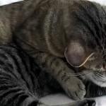子猫が里親に引き取られる当日、母猫の様子が違って見えた。