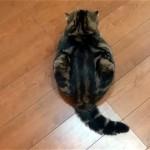 ツチノコのような格好で座っている猫ちゃん。何をしているのかなと思ったら…。