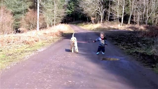 これは微笑ましい!|散歩する気ままな男の子を優しく見守る仲良しワンちゃん