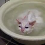 気持ち良さそうにお風呂を楽しむ子猫、飼い主さんが湯船から出したところ…