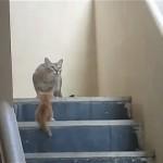 子猫を咥えたまま忍者のように立ち去った母猫がカッコ良すぎる!