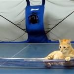 これは凄い!|卓球台に寝そべる猫にピンポン球をサーブしてみた結果こうなった