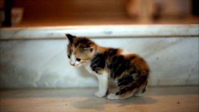 子猫のトラブルをいち早く察知して駆けつける優しく頼りになるお母さん猫