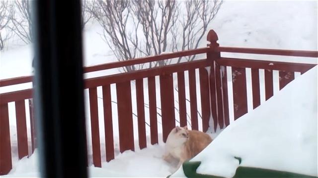 大積雪の中、真っ直ぐな性格の猫が見せたワイルド過ぎる登場の仕方(笑)