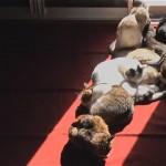 窓の日差しを求めて大移動する猫たちのタイムラプス(微速度撮影)映像