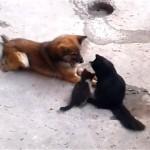 子猫を連れて旧友(犬)に会いにきた母猫がとった意外な行動…