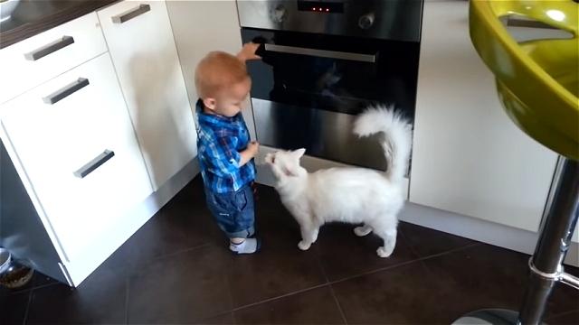 オーブンをいじって遊んでいる男の子を全力で制止するお利口なニャンコ