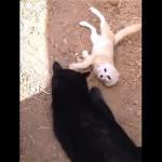 大親友の猫と再会して大喜びをする犬そっくりのフェネック