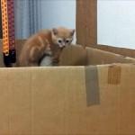 これは微笑ましい!|ダンボールから脱出を企てる子猫をサポートする母猫