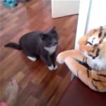 縫いぐるみに向かって強烈なパンチを連打する猫ファイター