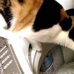 これは凄い!|洗濯機に落ちた結果、水の観察方法が変わった猫