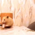 これはカワイイ!|オヤツを食べているハムスターに猫がこっそり近づいた結果、こうなった・・・