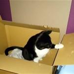 これは衝撃!|猫にダンボールを与えた結果、3ヶ月後にはこうなった!