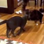 これはお見事!|背後にいる猫の攻撃を交わす忍者のような猫