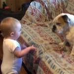 何があったの?|激オコ赤ちゃんの対処の仕方が分からず、困惑するワンちゃん