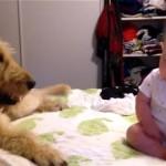 恥ずかしそうにする赤ちゃんがワンちゃんに触れないでいた結果、こうなった