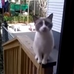 勝手口からこちらを覗いている猫。何か用?と近づいた結果、こうなった