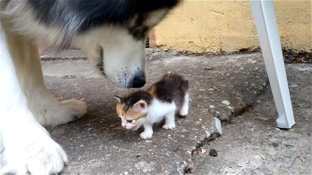 壊れそうな小っちゃな子猫の遊び相手をする優しい先輩のワンちゃん。