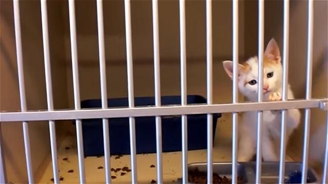動物保護施設のシェルターで出会ったカワイイ子猫「タイガー」